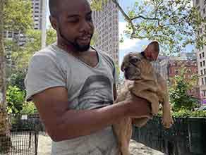 Charlie - Merle French Bulldog Puppy